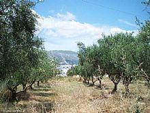 Greece property in Ionian Islands, Mouzaki